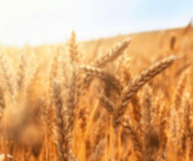 Unser Getreidesortiment