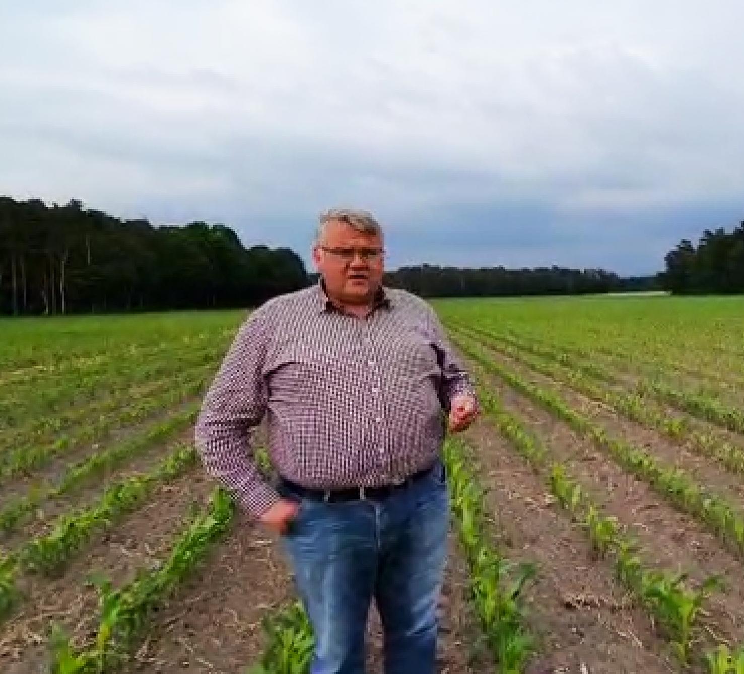 Erste Auflaufimpressionen Mais MAGNATO und CAVALLO aus Stemwede (NRW)