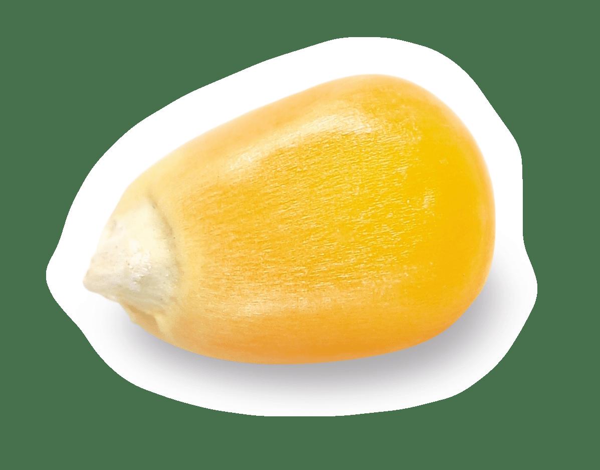 AGAPIA Früher Körnermais