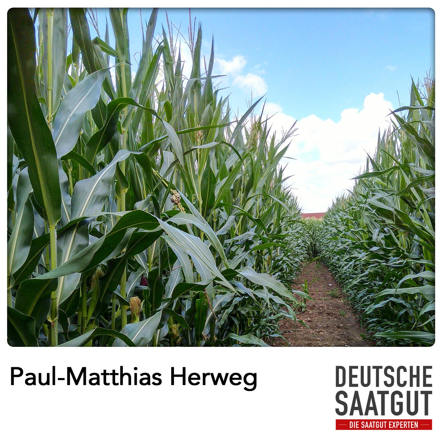 Paul-Matthias Herweg bei der Mais-Sortendemo in Delbrück, NRW