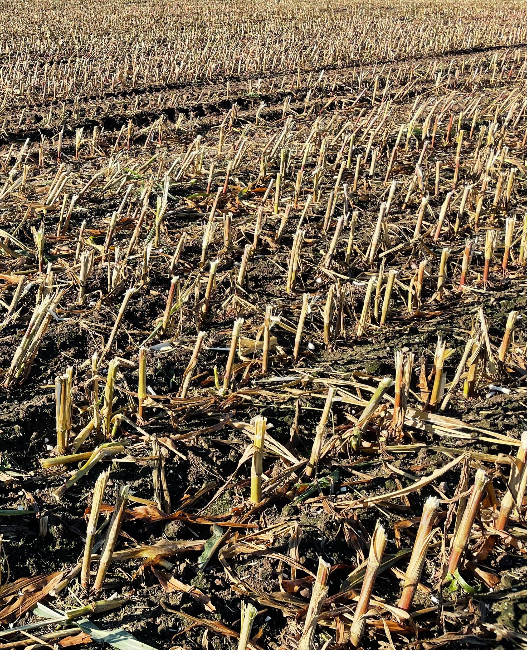 Nach der Ernte ist vor der Saat.